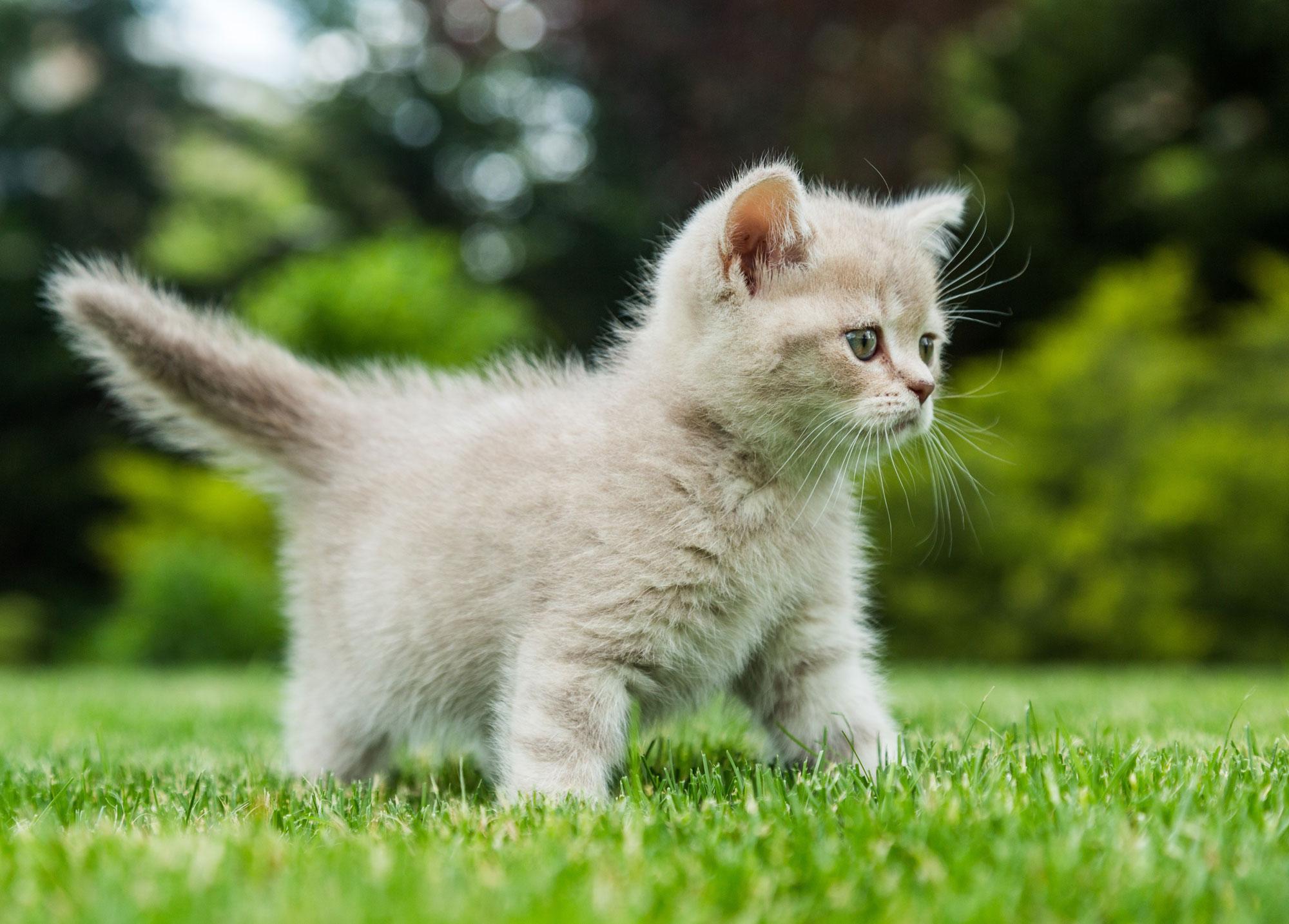 katzen wohnungshaltung oder freig nger tiermagazin