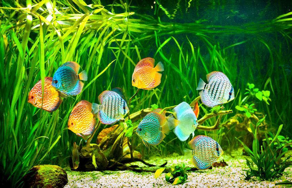Aquarium Und Fische Fur Anfanger Tiermagazin